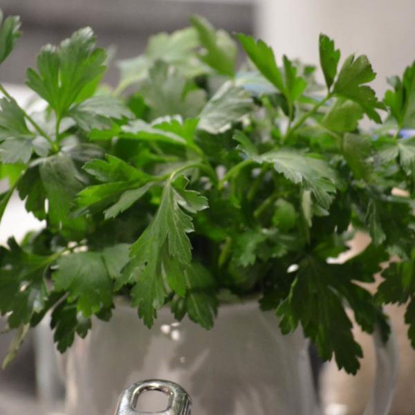 COOK and ENJOY Rezept Risotto mit Pilzen