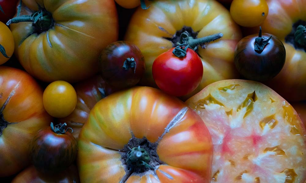 COOK and ENJOY Blog News Tipps Saison frische Tomaten